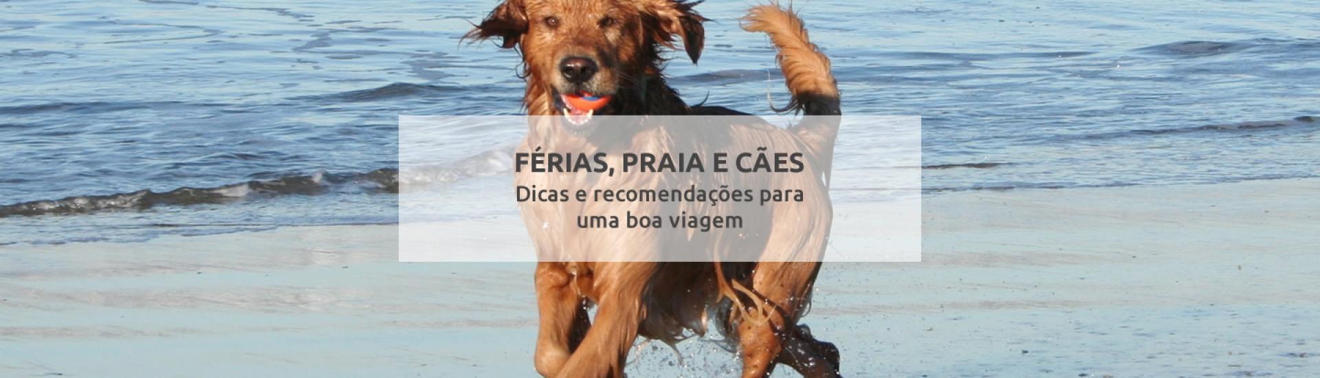 Férias, praia e cães